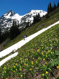 Glacier lilies, hikers, & Mesahchie