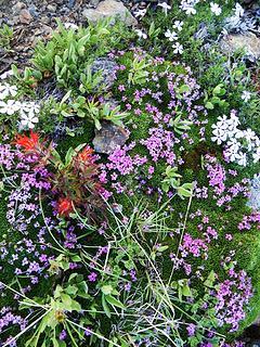 Flower Garden In The Rocks