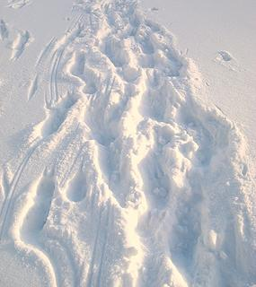 Crampon tracks in the snow