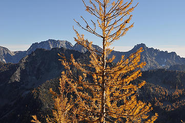 Larch on Eightmile