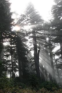 Sunburst through fog on Persis trail