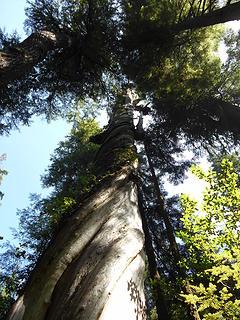 Cedar Grove Trail 082219 12