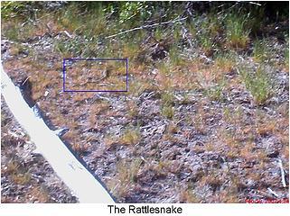 Rattlesnake!!!!!!!!