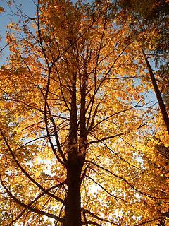 Alder Lake Park 102819 03
