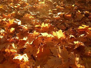 Alder Lake Park 102819 02