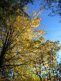 Alder Lake Park 102819 01