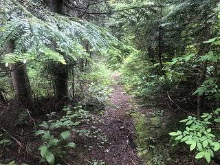 Logging Track