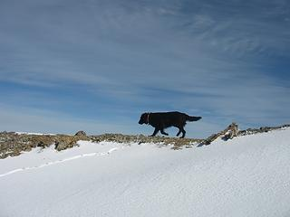 Zoey insisted on walking on the exposed ridge, in the full wind. Silly dog.