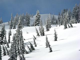 Sun & Shadow, Trees & Meadow, Snow & Sky