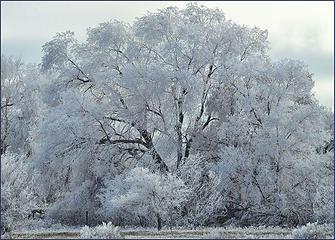 Frost in Utah