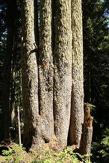 Four-legged tree