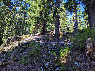 We broke into more open forest again near the base of the summit block at 4100', but still 1000' below the summit