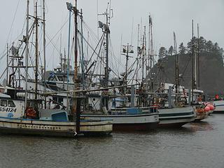 LaPush fishing fleet in the harbor