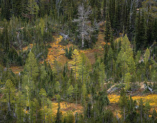 Oct_Alpine Lake Wilderness near Bean Pk