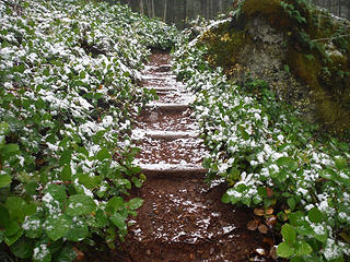 First snow dusting on the trail at 2300 feet