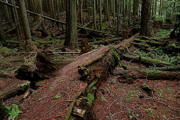 nicely built trail crossing a swampy area atop a fallen log