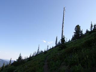 Snag heading back north on Crystal Peak trail.