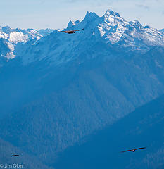 Big Birds Soar Over Skagit (1 of 1)