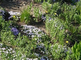Flowers on way down Crystal Peak trail.