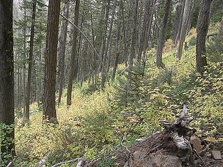 Views of colors from upper Miller Peak trail.