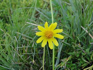 Flower on Crystal Peak trail.