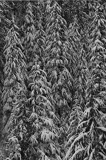 B-&-W-Trees