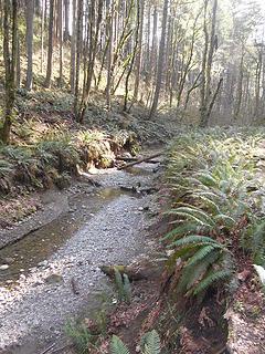 Swan Creek Park 022120 06