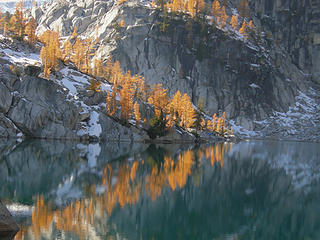 Larches reflecting in Lake Vivian
