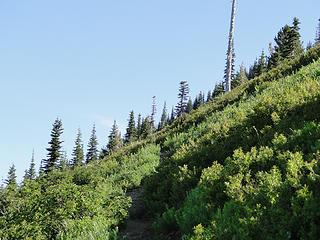Crystal Peak trail nearing snag/snow area.