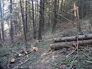 Some recent blowdown from windy days on the West End Primitive Trail.