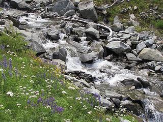 Wildflowers at White Creek Basin 2