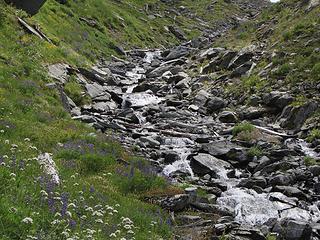 Wildflowers at White Creek Basin 1
