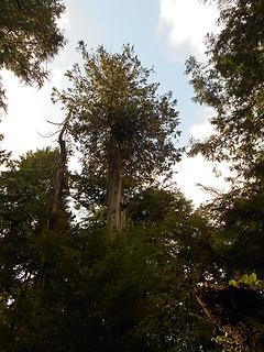Kalaloch Nature Trail 092419 01