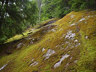 lichened boulders