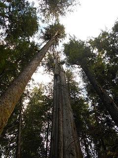 Cedar Grove Trail 092719 02