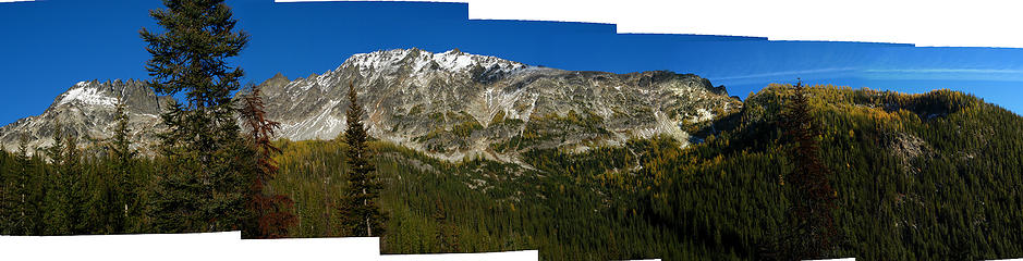 Larches to the east