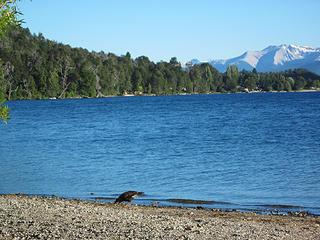 Lago Guitierrez, where the trail to refugio Frey begins.