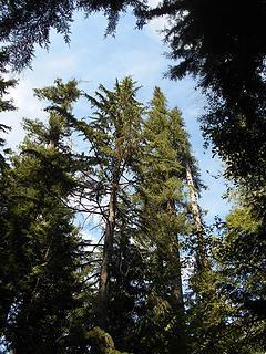 Asahel Curtis Nature Trail No. 1023 082819 05