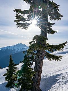 Sunburst - Tree - Glacier