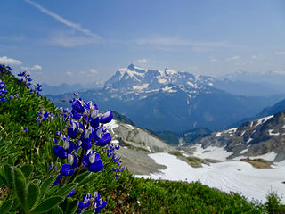 Lupine and Shuksan