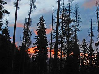 Sunrise through the trees.