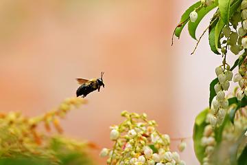 5- Bumble bee