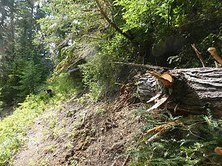 Cantilevered log at 3950' - after