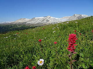 Wildflower traverse on Mt. Steve revisited