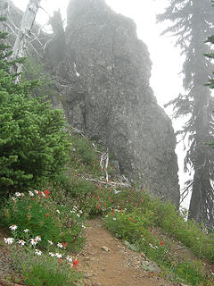 Cliffs and wildflowers 4900 ft/6.4 mi