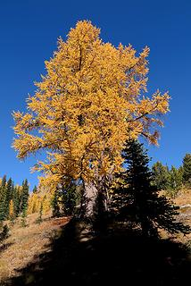Other side of our landmark larch