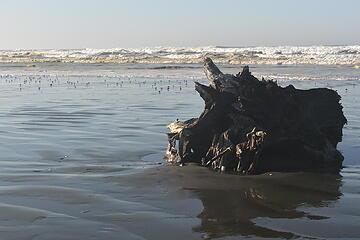 Ocean Shores in December