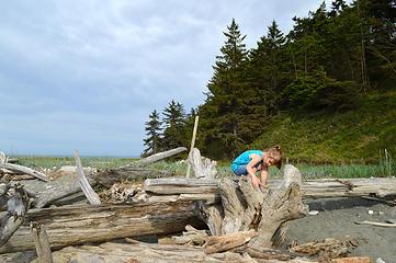 Driftwood exploration 3