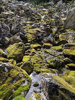 Mossy carpet ride
