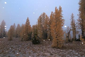 snowing on the meadow